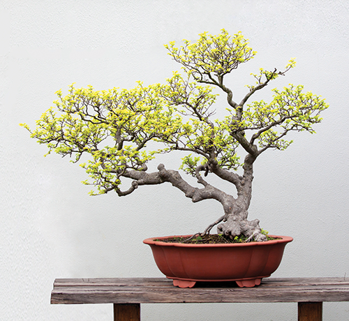 Learn the art of bonsai telly 39 s greenhouse garden center Telly s greenhouse and garden center
