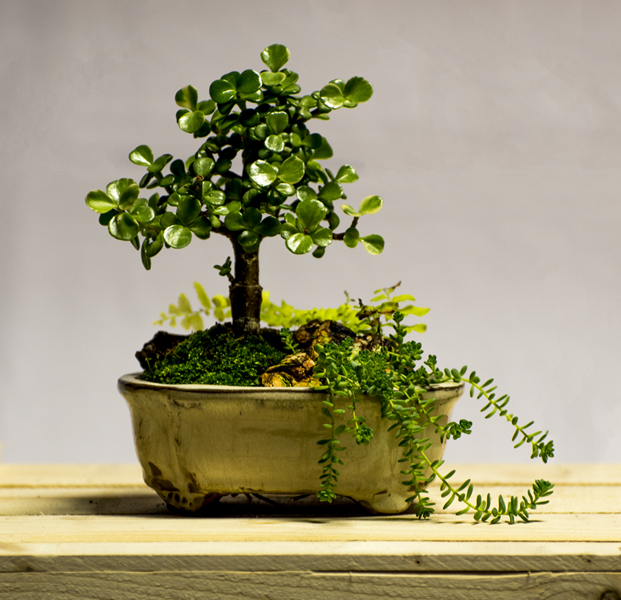 Bonsai Workshop Learn The Art Of Bonsai At Telly S Greenhouse