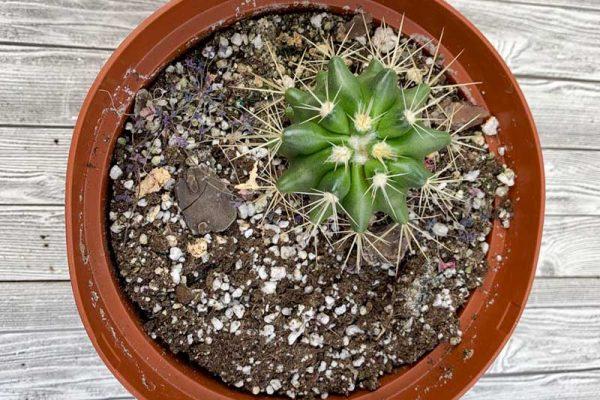 Cactus - Assorted