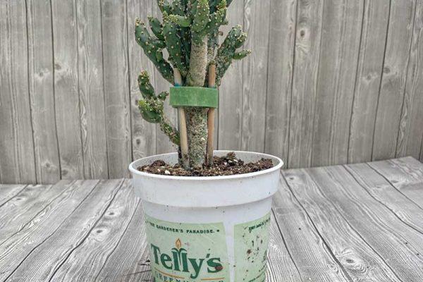 Cactus - Assorted Premium